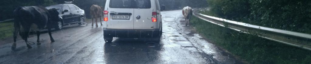 таксі економ в Україні